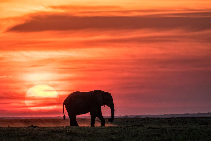 Elefant im Sonnenuntergang, Chobe Nationalpark - JELOZI