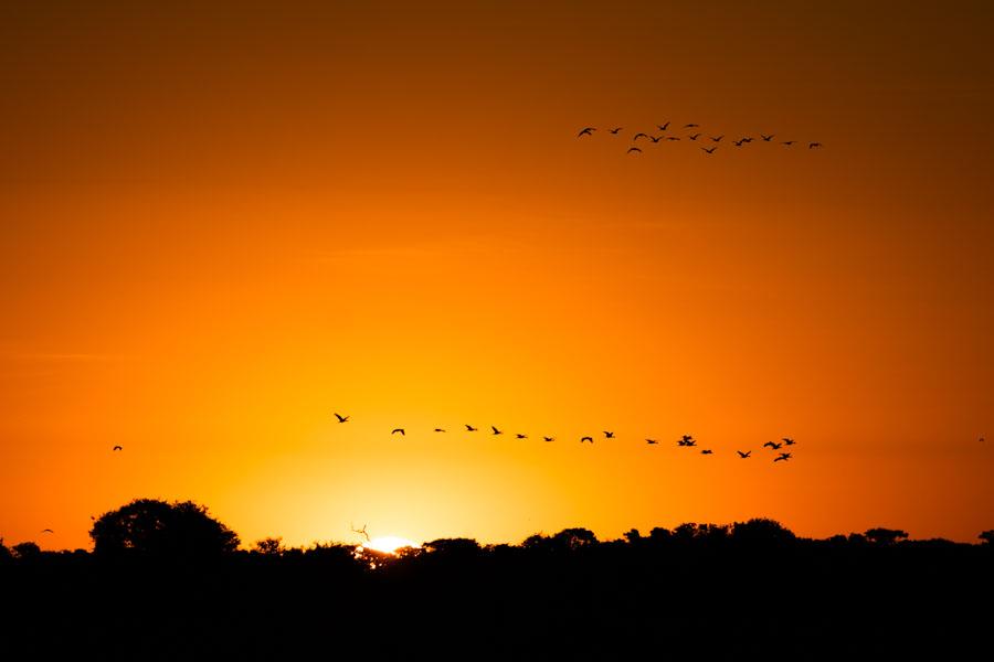 Vögel im Sonnenuntergang, Pantanal - JELOZI