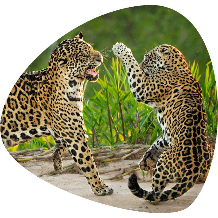 fotografie-jelozi-startseite-wildlife