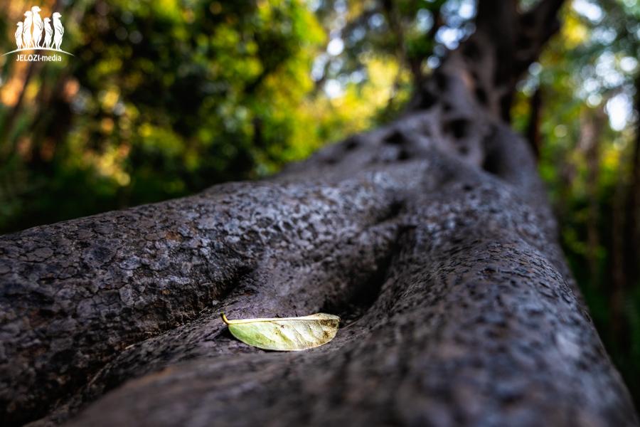 Einsames Blatt - Afrika, Victoria Wasserfälle - JELOZI