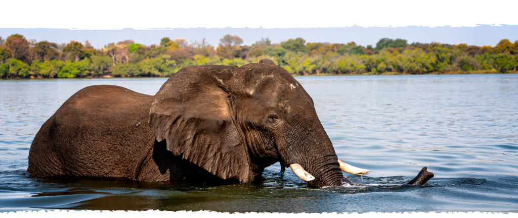 fotografie-jelozi-startseite-tierfotografie-elefant-unterseite-handy