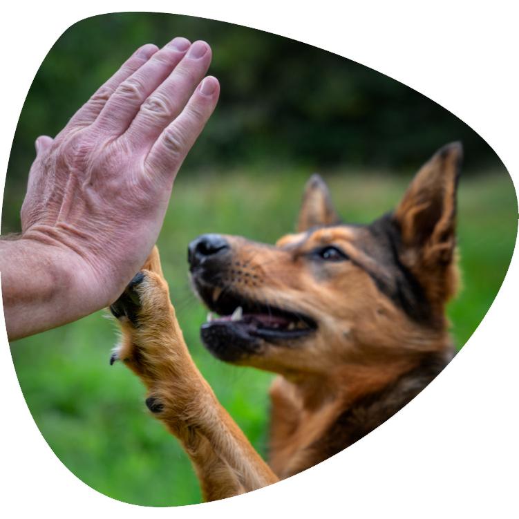 fotografie-jelozi-startseite-tiershooting-hund