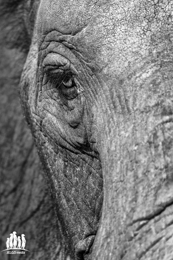 Elefantenblick - Afrika/Simbabwe - JELOZI