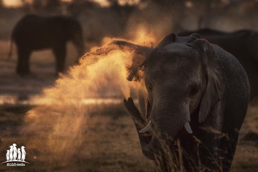 Elefantensandbad im Sonnenuntergang - Afrika, Simbabwe - JELOZI