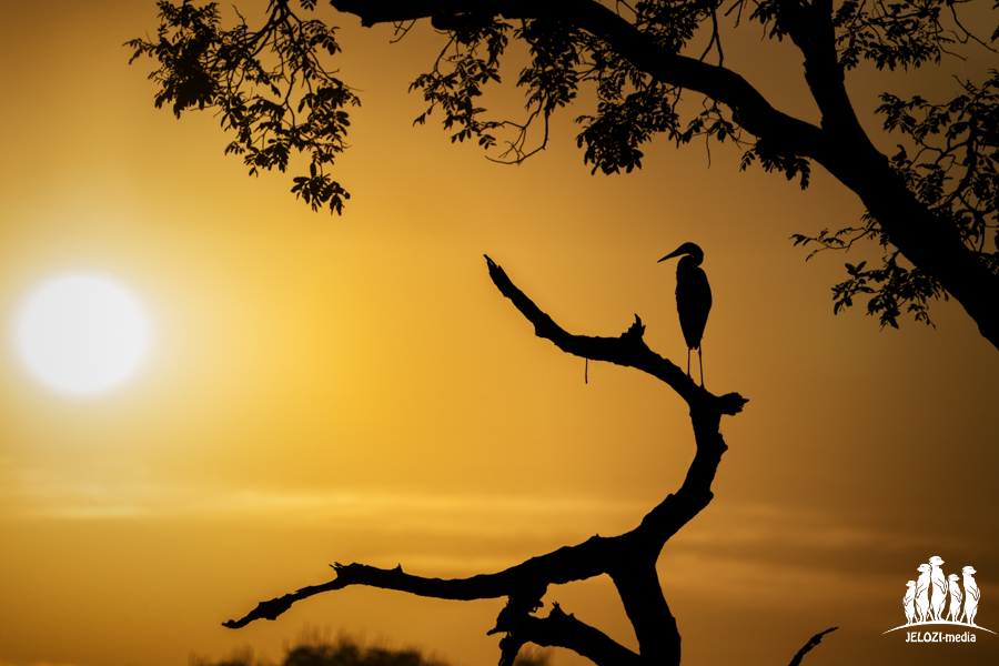 Reihersilhouette - Brasilien, Pantanal - JELOZI