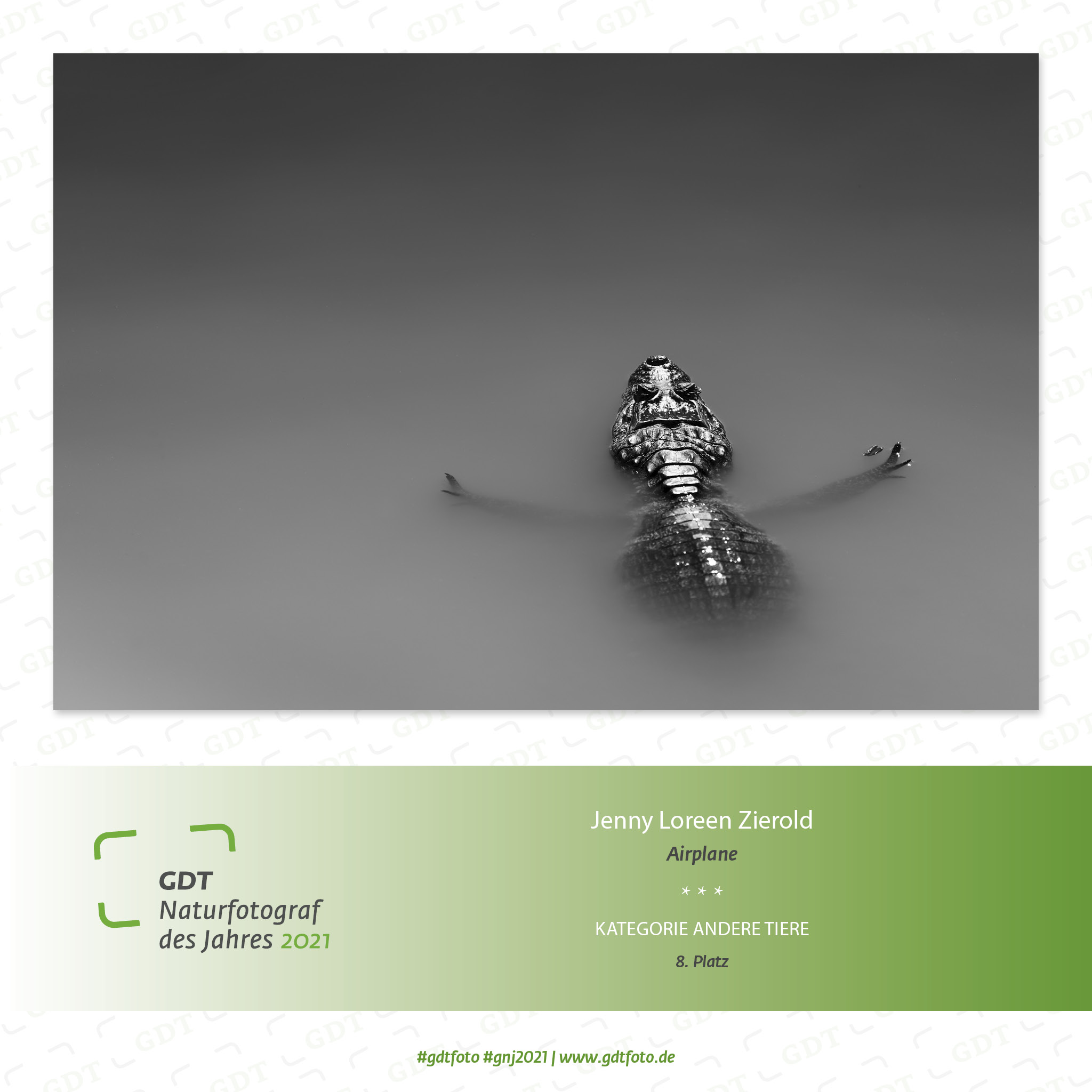jelozi-fotografie-gdt-erfolg-krokodil-schwarz-weiß-Quadrat